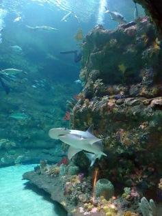 NC Aquarium, Fort Fisher